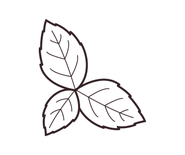 Peppermint leaf illustration