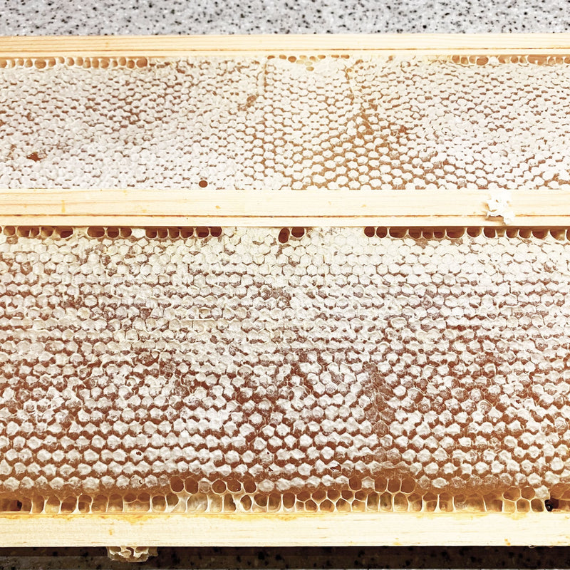 Three Sisters Comb Honey in frame