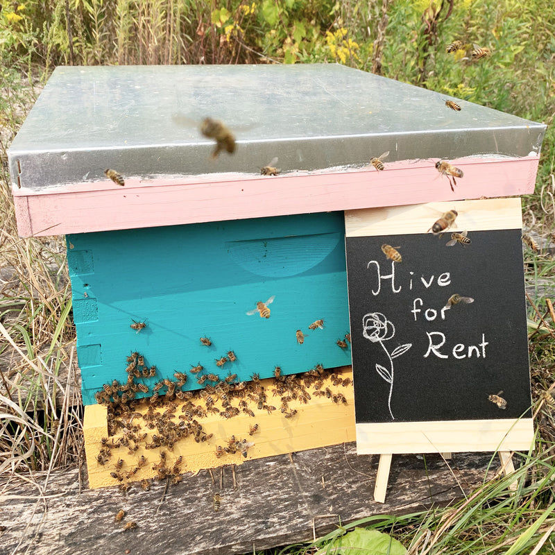 Bee hive for rent