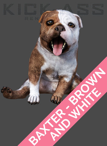 BAXTER - BROWN AND WHITE
