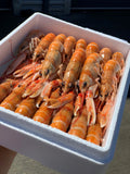 Scottish Langoustines
