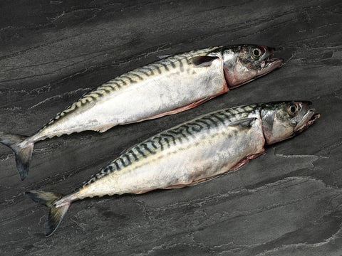 2 x Scottish Line Caught Mackerel 250-350gm