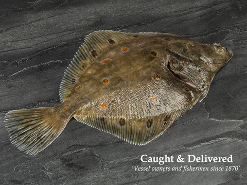 1 x Whole Plaice 340-454gm