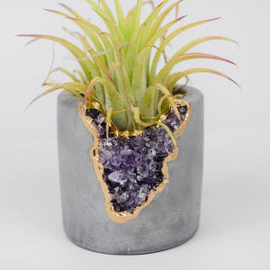 Amethyst Shooter Planter
