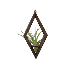 Air Plant Hanger Diamond (With Plant)