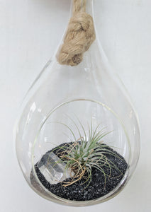 Glass Terrarium with Crystal and Air plant