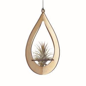 Air Plant Hanger Teardrop (with plant)