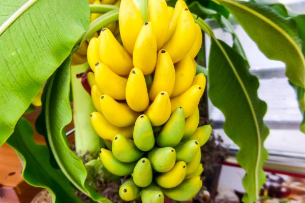 Why Banana is the prefect pre and post work out fruit
