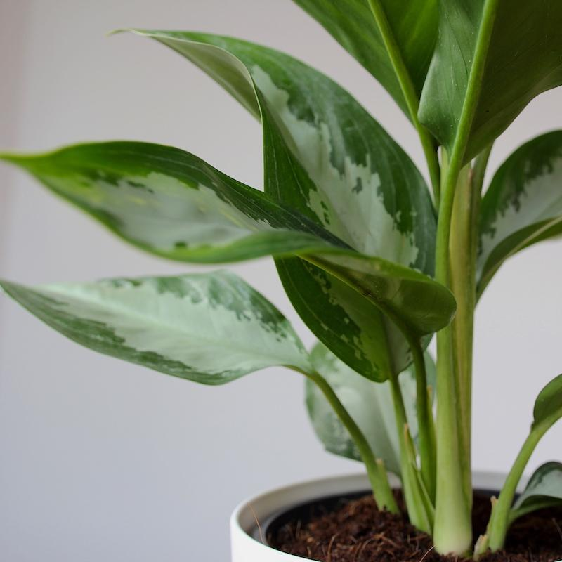 Do house plants purify your air?