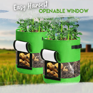 Transparent Visible Potato Planter