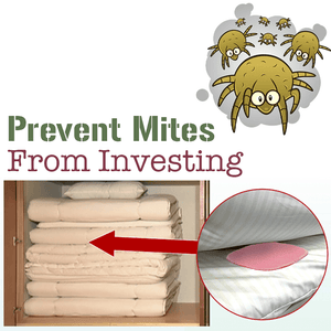 Bed Mite Trap Pad