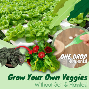 Hydroponic Vegetables Liquid Fertilizer