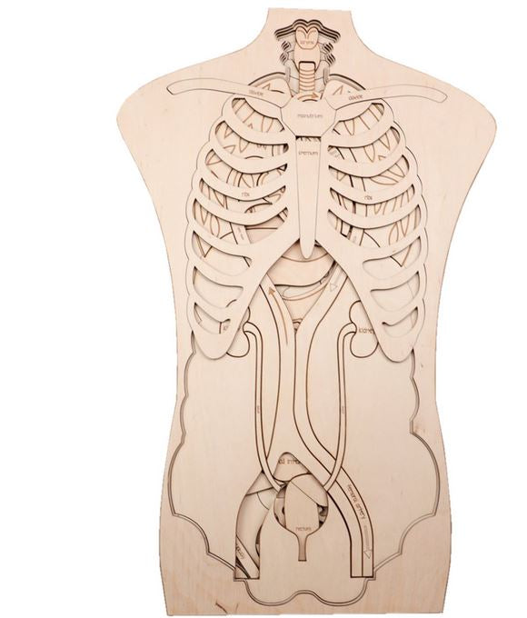 Human Anatomy Wooden Puzzle