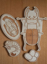 Load image into Gallery viewer, Stag Beetle Life Cycle Wooden Puzzle