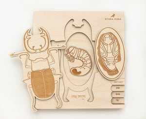 Stag Beetle Life Cycle Wooden Puzzle