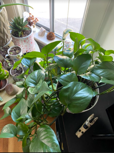 How to Help Your Houseplants Thrive