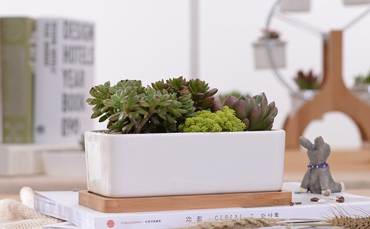 """The Cove"" Ceramic Planter & Bamboo Dish"