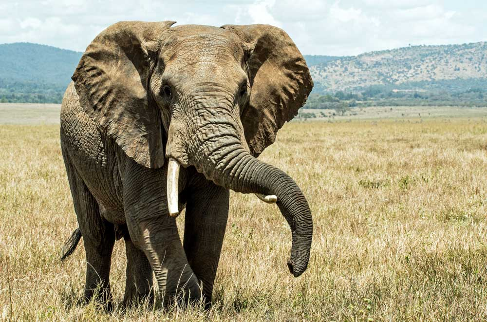 33fuel be an athlete at work - how to eat an elephant