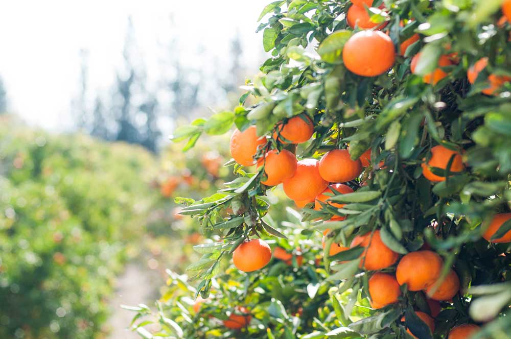 best foods to boost your immune system - citrus