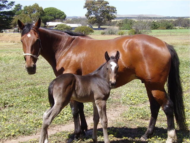 A healthy foal starts with a healthy mare
