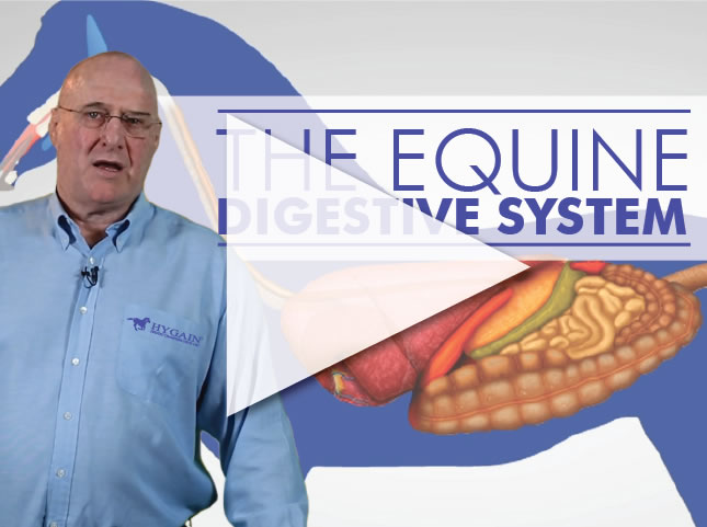 The horse's digestive system explained via video