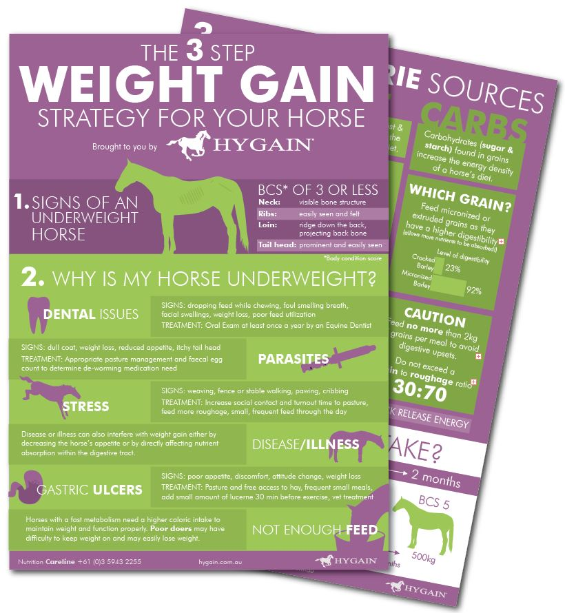 fact-sheet-weight-gain-free-download