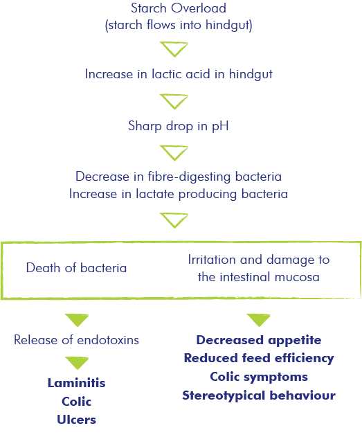 Hindgut Acidosis explained simple easy
