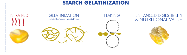 Micronized Grains - Starch gelatinazation
