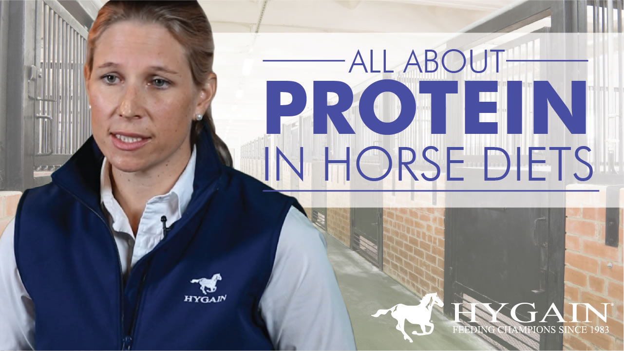 The truth about protein in horse diets