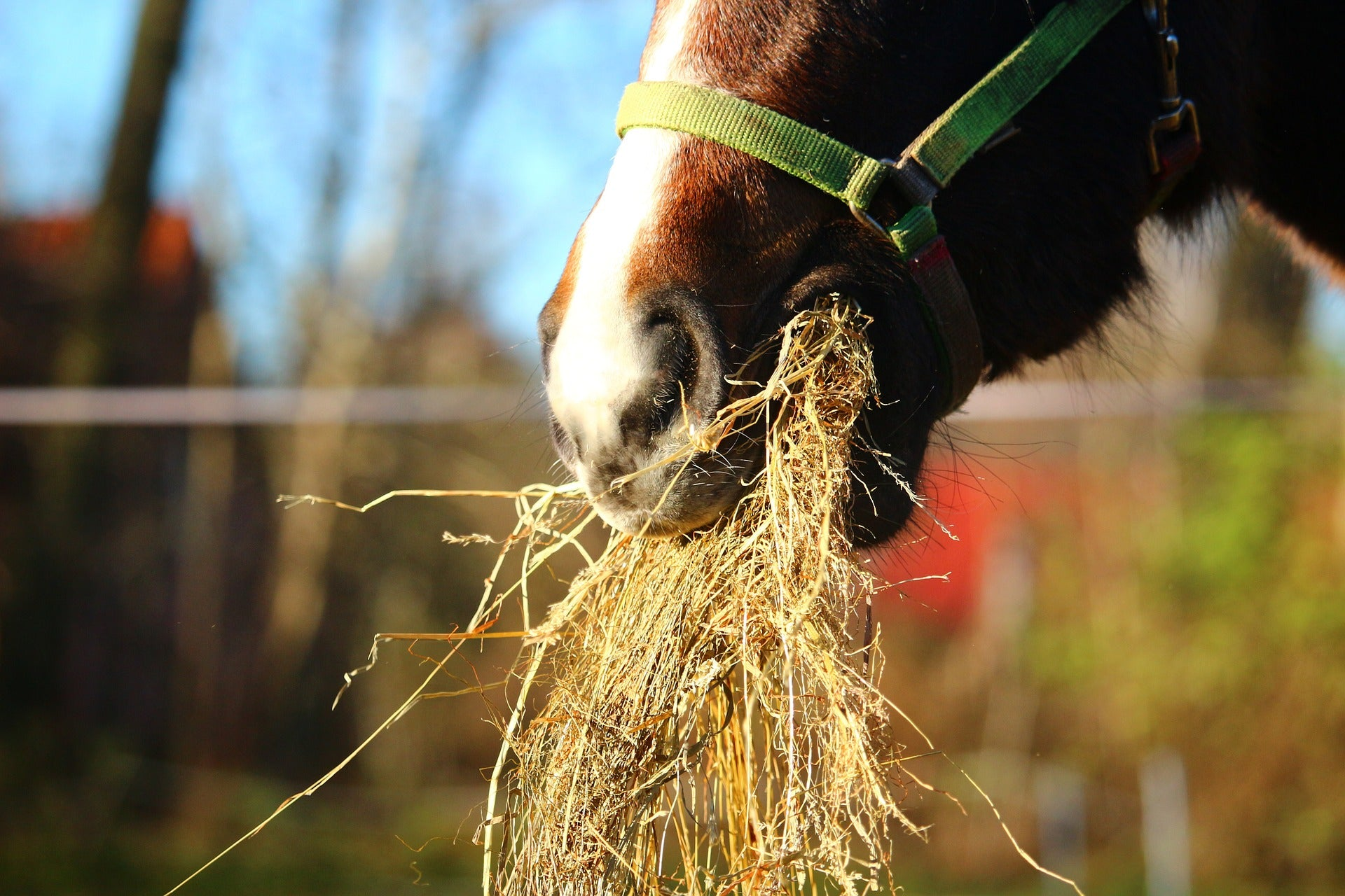 best type of hay for horses
