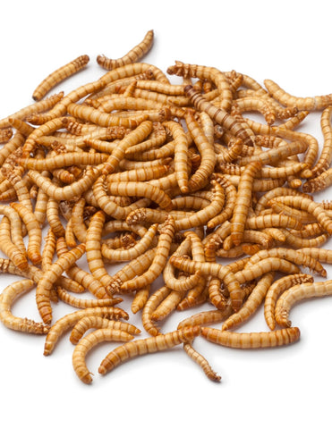 Chief Reptile Mealworms