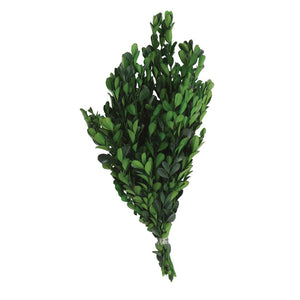 Dried Natural Boxwood Bunch, Green