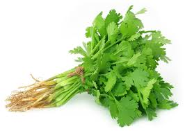 Fresh Cilantro Bunch (Coriander Leaves)