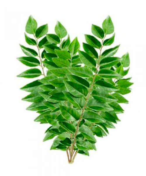 Fresh Curry Leaves (Kari Patta)