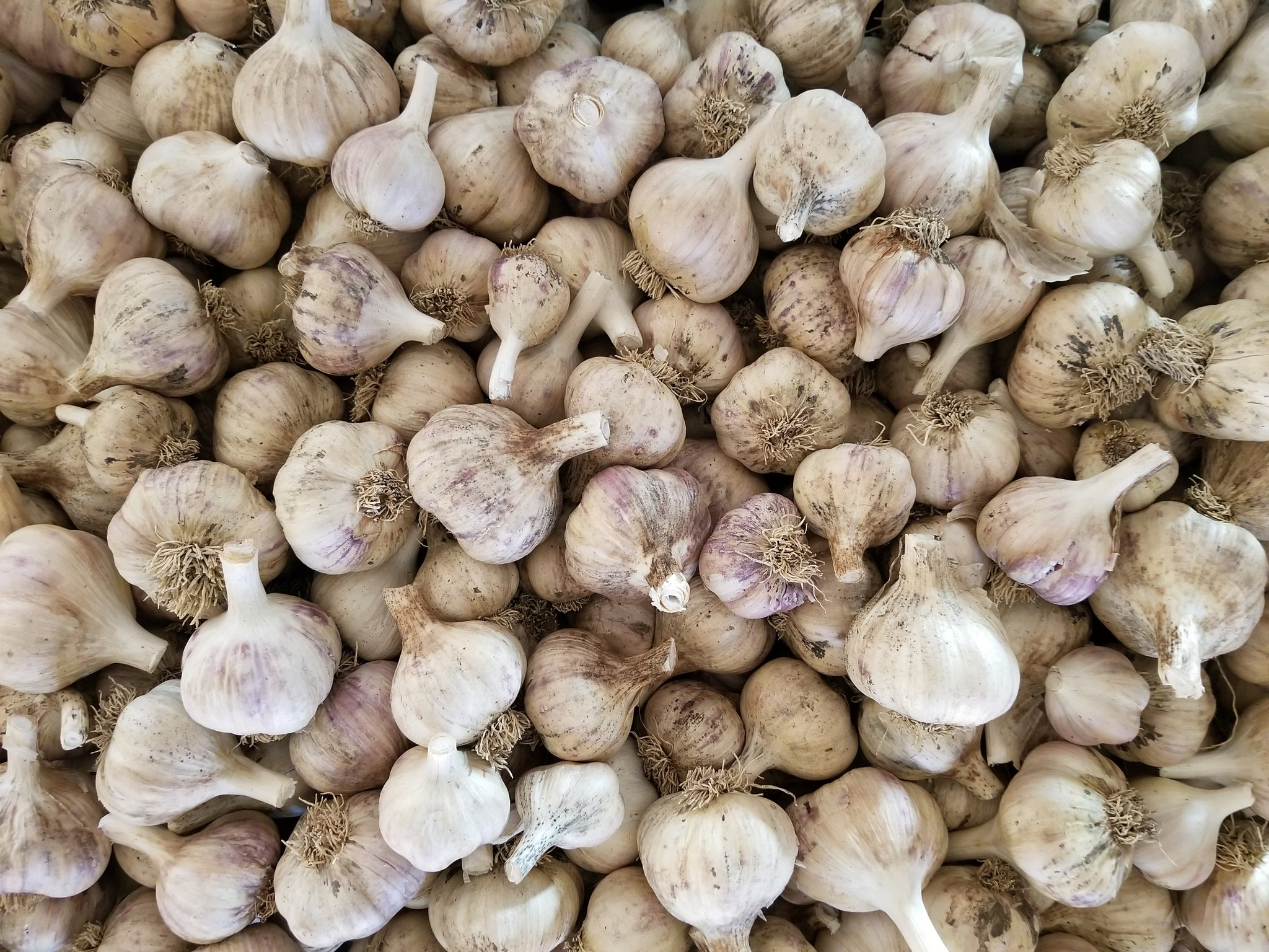 Garlic - 1 lb bag