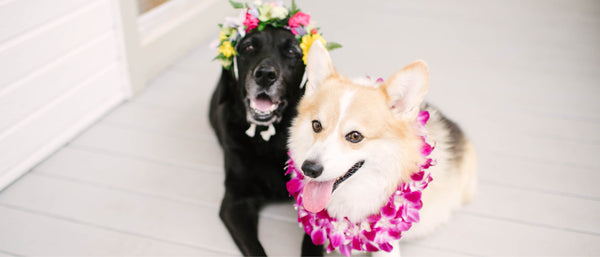 Cat & Dog Lei - Shipping & Delivery - Hawaii Lei Stand