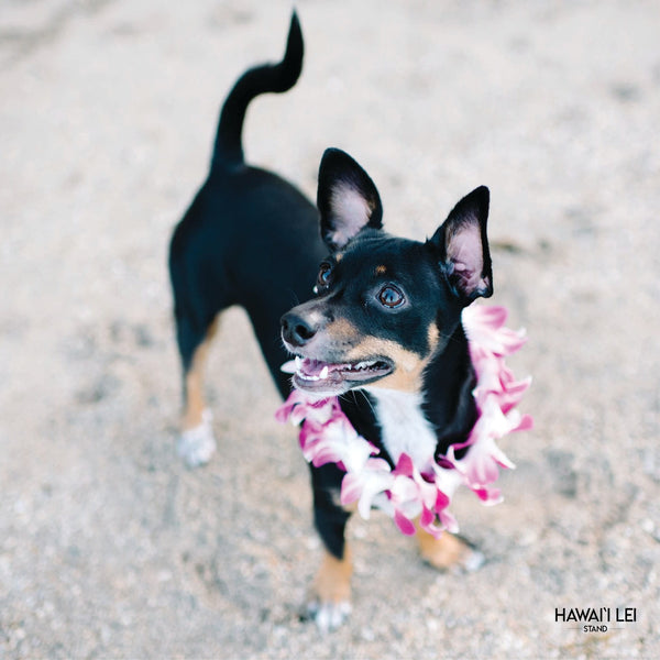 Doggy Single Orchid Lei (Small Dog) Lei Shipping And Delivery From Honolulu Hawaii