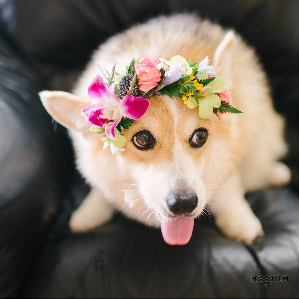 Dog Haku Lei - Hawaii Lei Stand
