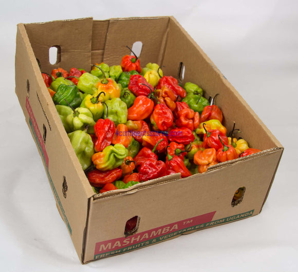 Hot Pepper 1.5kg 1/2box