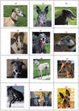 Greyhound Note Cards (set of 10 cards)