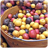 Organic Colorful Baby Potato Mix, 6-7 lbs