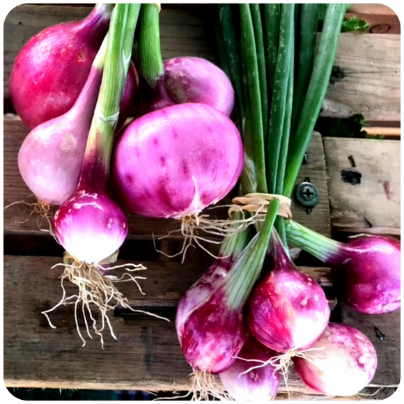 Organic Red Onions, 3 bunches