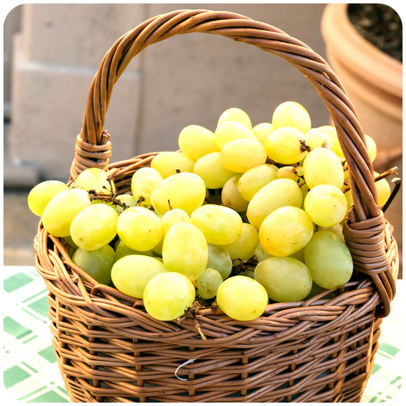 Organic Seedless Thompson Mini White Grapes, 2.5 lbs