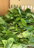AA034 Organic Basil Leaves, 2 bunches