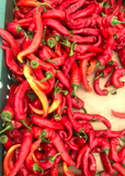 Organic Jimmy Nardello Italian Chile Peppers, 1 pound