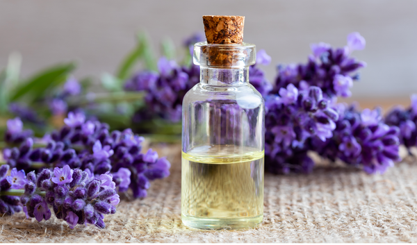Lavender Essential Oil – A cure for your anxiety