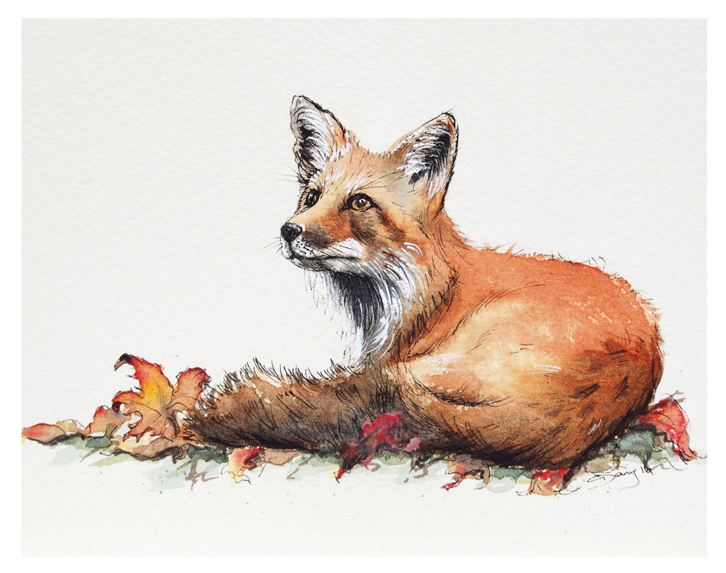 Red Fox Laying - Art Print