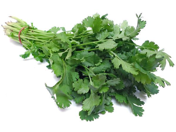 Fresh Coriander leaves - Hara Dhania - Corriander