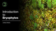 Introduction to Bryophytes