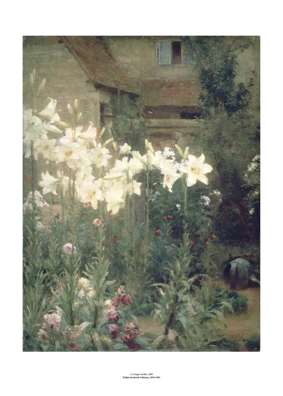 A garden at the back of a house with tall white lilies taking up most of the painting. The flowers almost seem to glow against the subdued greens and browns of the rest of the image. The painting is surrounded by a white border with its name and painter at bottom centre.